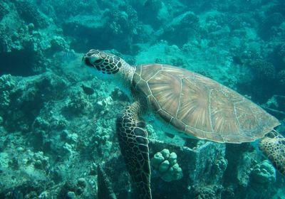 サンライズ ウミガメ