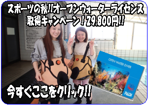 スポーツの秋!OWキャンペーン29800円