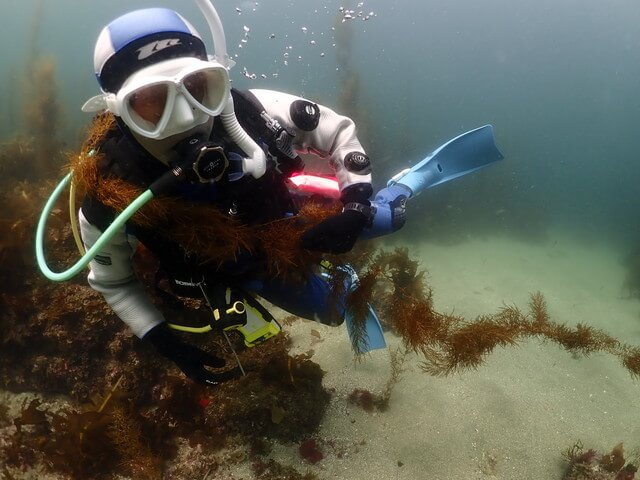海藻 ダイバー
