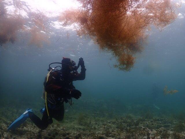 流れ藻 青海島