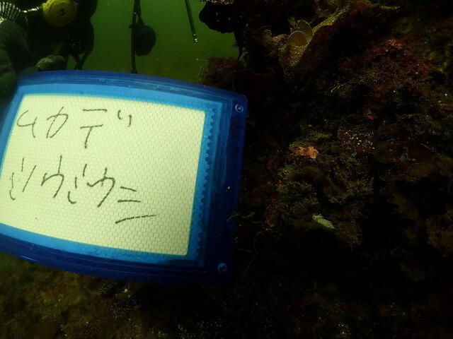 ダイブショップサンライズ 福岡 ダイビング