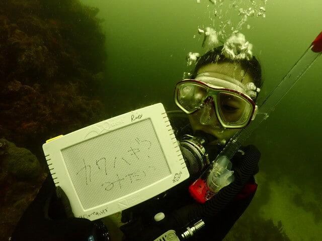 ダイブショップサンライズ 濁った海