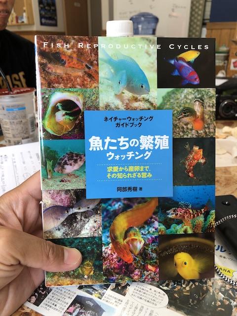 ダイブショップサンライズ 魚たちの繁殖ウオッチング