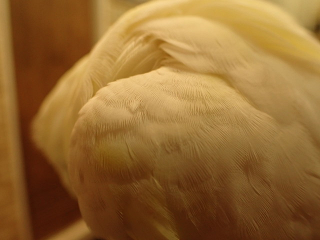 ダイブショップサンライズ 羽毛