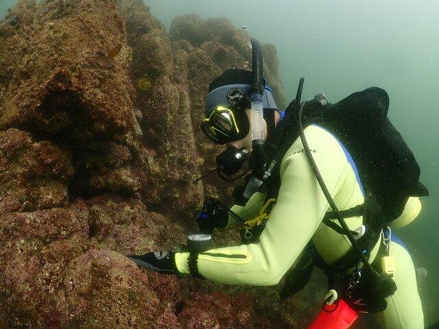 ダイブショップサンライズ 海藻