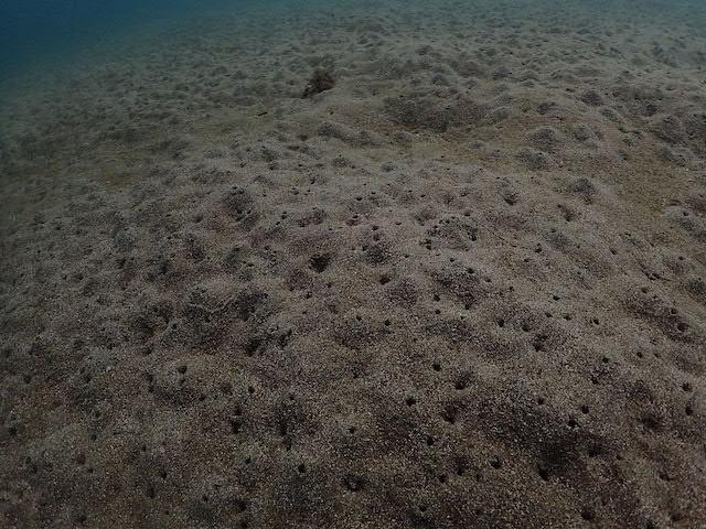 ダイブショップサンライズ 砂地