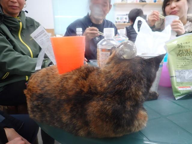 ダイブショップサンライズ 猫