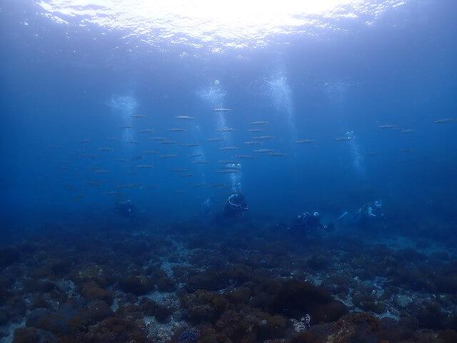 ダイブショップサンライズ 鹿児島