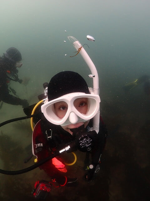 ダイブショップさんらず 海藻