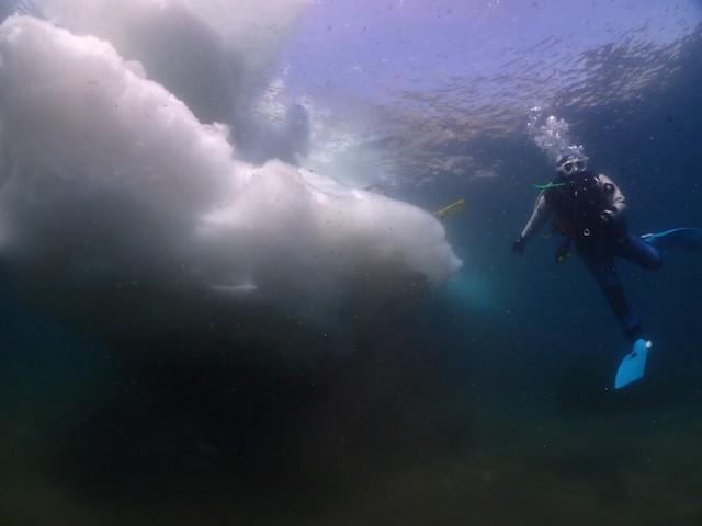 ダイブショップサンライズ 知床ダイビング 流氷
