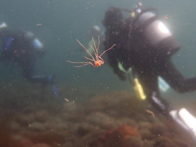 ダイブショップサンライズ 知床ダイビング  ウミクモ