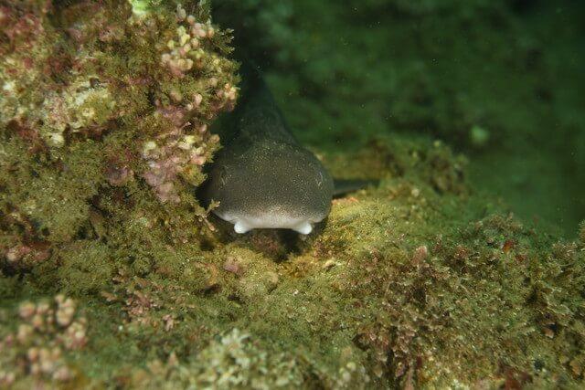 ダイブショップサンライズ サメ