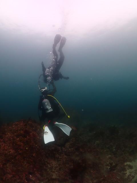 ダイブショップサンライズ 志賀島で体験ダイビング
