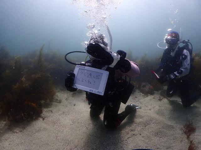 ダイブショップサンライズ 魚の見分け方